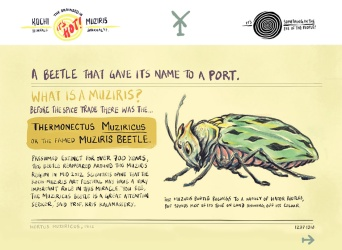 At the #KochiMuzirisBiennale, did you chance upon the Muziris Beetle? - A #Brainded report by 'Katta localite' Kuttappan, with Appupen (1/2)